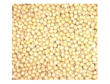 北海道産白大豆(ロースト・無塩) 10kg ※他の商品と同梱できません の商品画像